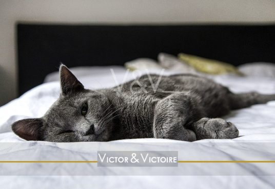 Nantes Procé appartement chat gris allongé lit blanc chambre appartement Victor & Victoire immobilier Real estate agency