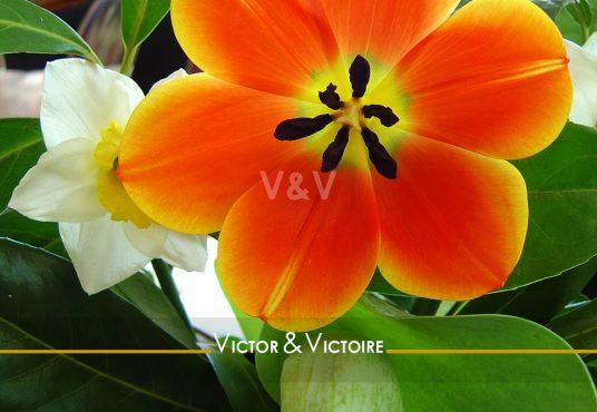 fleur orange bordée jaune pistil noir Nantes Chézine Appartement Agence immobilière Victor & Victoire Real estate agency