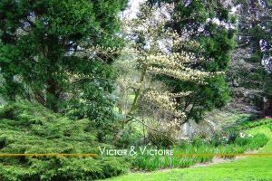 arbres et verdure le long de la rivière parc de Procé Nantes Agence immobilière Victor & Victoire Real estate agency