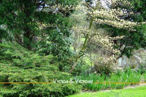 Nantes parc de Procé arbres au bord de l'eau Agence immobilière Victor & Victoire Real estate agency