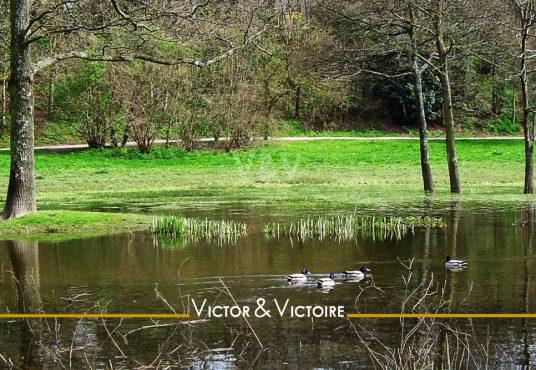 Appartement T3 Nantes Parc de Procé quatre canards nagent dans le parc arbres et verdure Agence immobilière Victor & Victoire Real estate agency