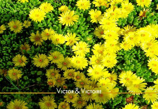tapis de petites fleurs jaune Appartement T4 centre Nantes Agence immobilière Victor & Victoire Real estate agency