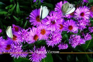 trois papillons butinent des petites fleurs violettes? Appartement T4 Nantes centre Agence immobilière Victor & Victoire Real estate agency