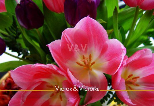 Paris 15e appartement tulipes roses en corolle sur fond de tulipes roses et violettes Agence immobilière Victor & Victoire Real estate agency