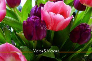 appartement T1 Nantes centre bouquet de tulipes roses et violettes Agence immobilière Victor & Victoire Real estate agency