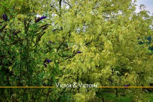 appartement T2 Nantes nord feuillage vert tendre arbre à papillons Agence immobilière Victor & Victoire Real estate agency