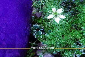 cache pot violet fleur étoilée blanche feuillage terrasse Maison T5 appartement T3 Paris 15e 18 ème Agence immobilière Victor & Victoire immobilier neuf Real estate agency